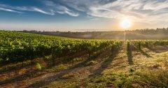 Meilleurs vins blancs du monde